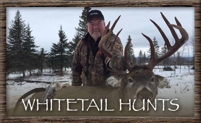 North Alberta Outfitters Inc. Whitetail Hunts