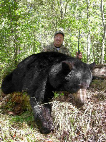 Bear Hunts